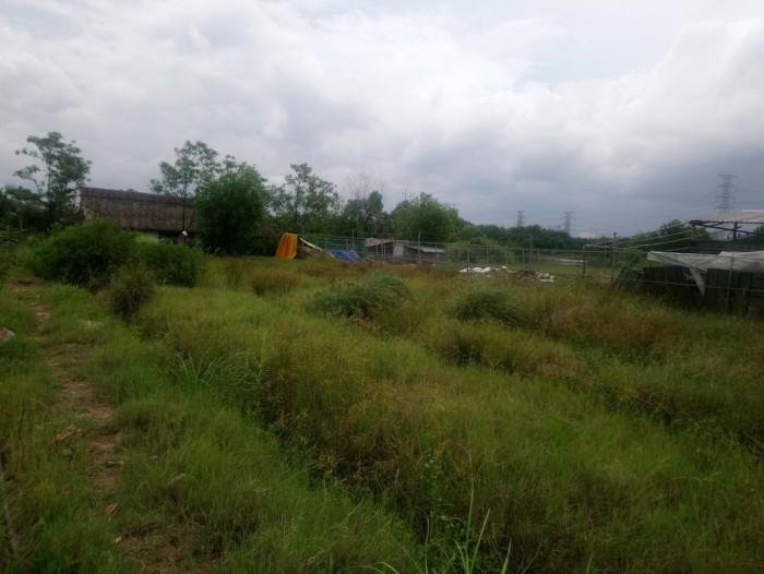 Đất Phạm Hữu Lầu 1001m2 - 5.2 Tỷ Xã Phước Kiển, Nhà Bè
