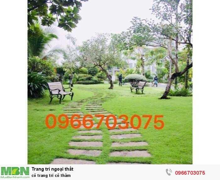 Cỏ trang trí cỏ thảm4