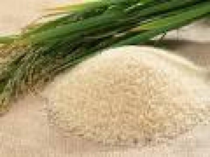 Gạo xi thái bình0