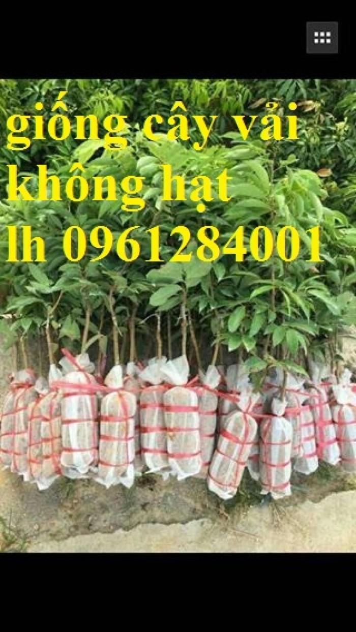 Địa chỉ cung cấp cây giống tốt, khỏe mạnh, giống vải không hạt12