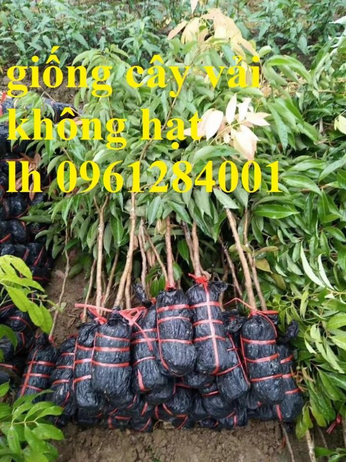 Địa chỉ cung cấp cây giống tốt, khỏe mạnh, giống vải không hạt13