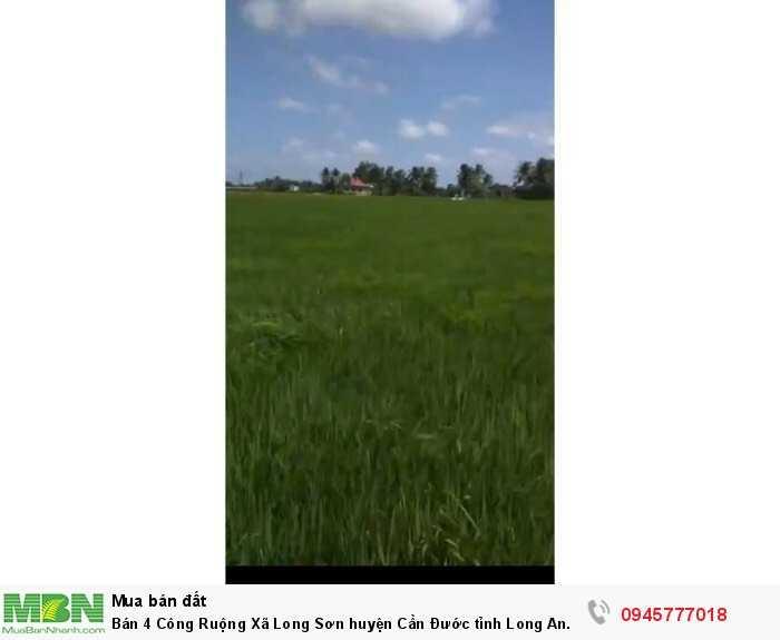Bán 4 Công Ruộng Xã Long Sơn huyện Cần Đước tỉnh Long An.