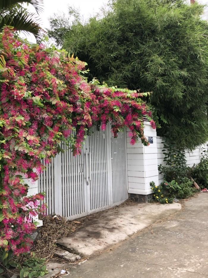 Bán nhà quận 7-nhà 5 phòng ngủ sổ hồng