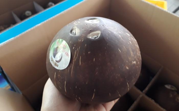 Dừa khô đánh bóng xuất khẩu1