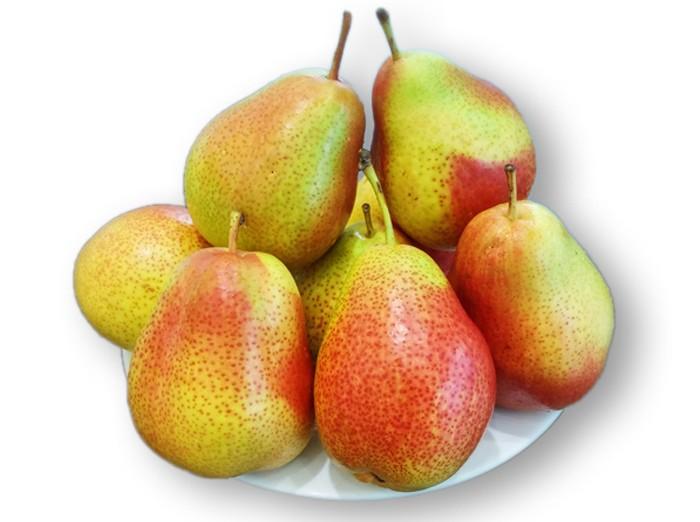 Viện cây giống trung ương, cung cấp giống lê đỏ nam phi, nhập khẩu nguyên cây2