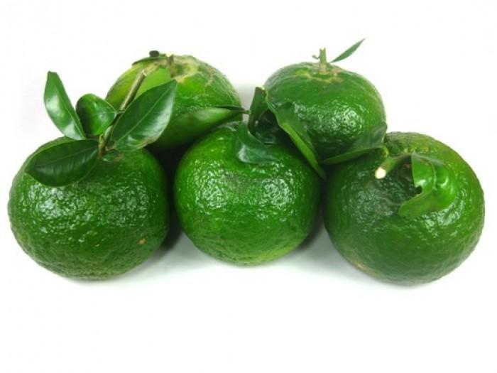 [3] Cung cấp giống cam sành, cam sành hà giang chuẩn giống, cung cấp số lượng lớn.