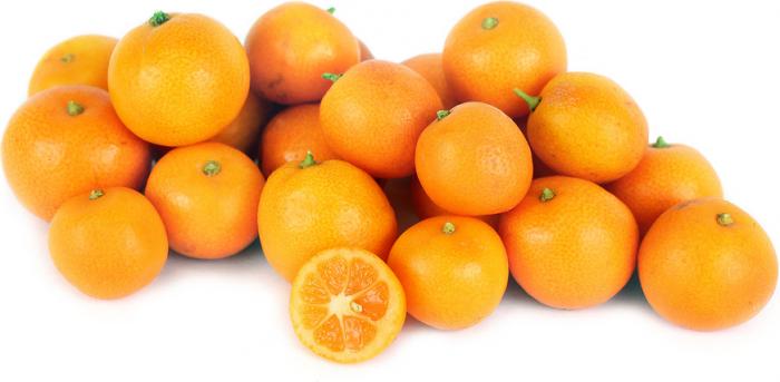 Viện cây giống trung ương: giống cây quất ngọt, chuẩn giống quất ngọt6