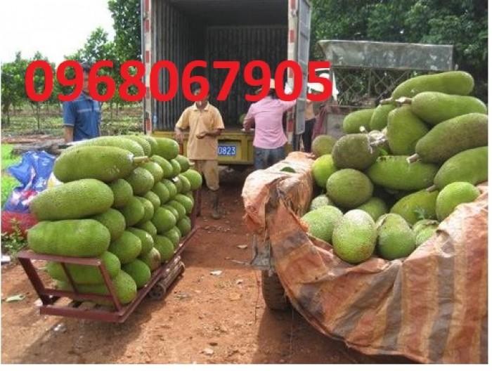 Bán giống mít trái dài, viện cây giống trung ương. cung cấp số lượng lớn, ưu đãi cho khách trồng.7