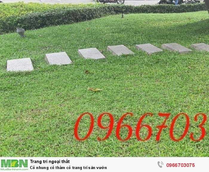 Cỏ nhung cỏ thảm cỏ  trang trí sân vườn0