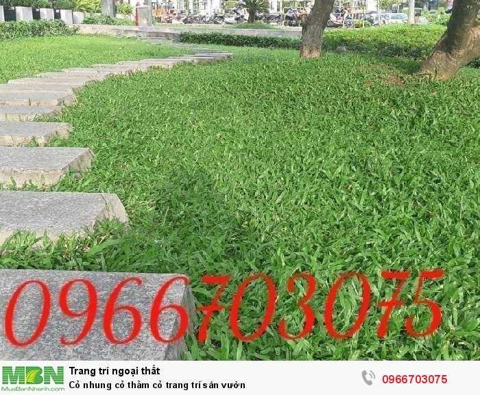 Cỏ nhung cỏ thảm cỏ  trang trí sân vườn1