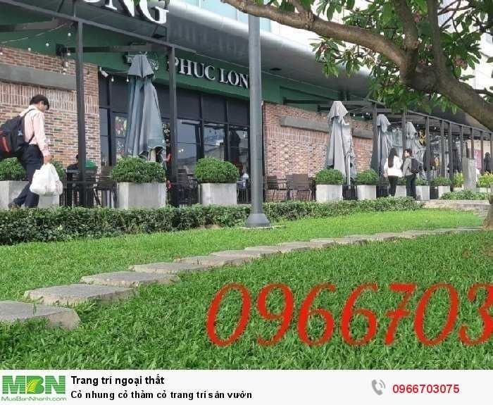 Cỏ nhung cỏ thảm cỏ  trang trí sân vườn2