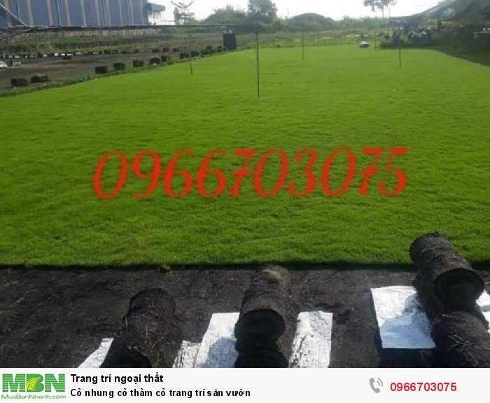 Cỏ nhung cỏ thảm cỏ  trang trí sân vườn4