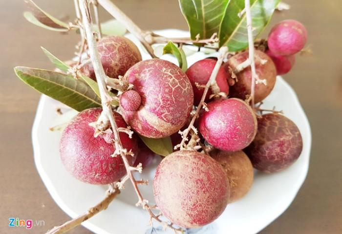 Viện cây giống trung ương, giống nhãn tím. nhãn tím nhập khẩu từ Thái Lan.2