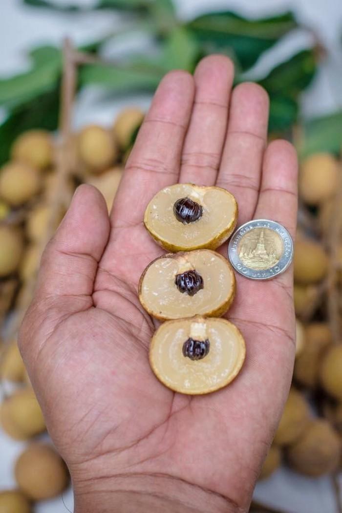 Viện cây giống trung ương, giỗng nhãn không hạt, chuẩn giống, số lượng lớn.2