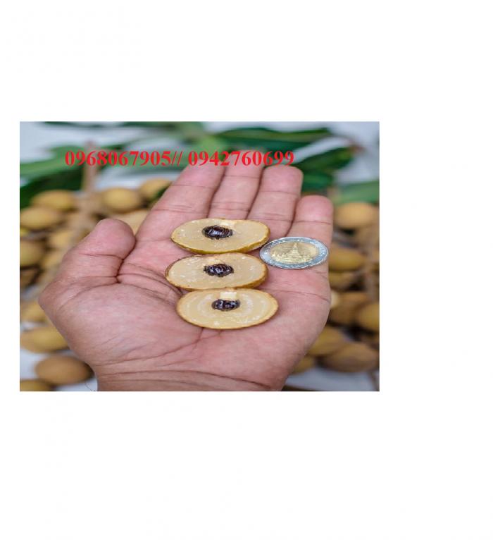 Viện cây giống trung ương, giỗng nhãn không hạt, chuẩn giống, số lượng lớn.6