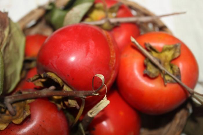 Hồng nhân hậu, giống hồng nhân hậu đẹp mê ly, cung cấp số lượng lớn.4