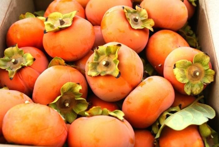 Hồng nhân hậu, giống hồng nhân hậu đẹp mê ly, cung cấp số lượng lớn.2