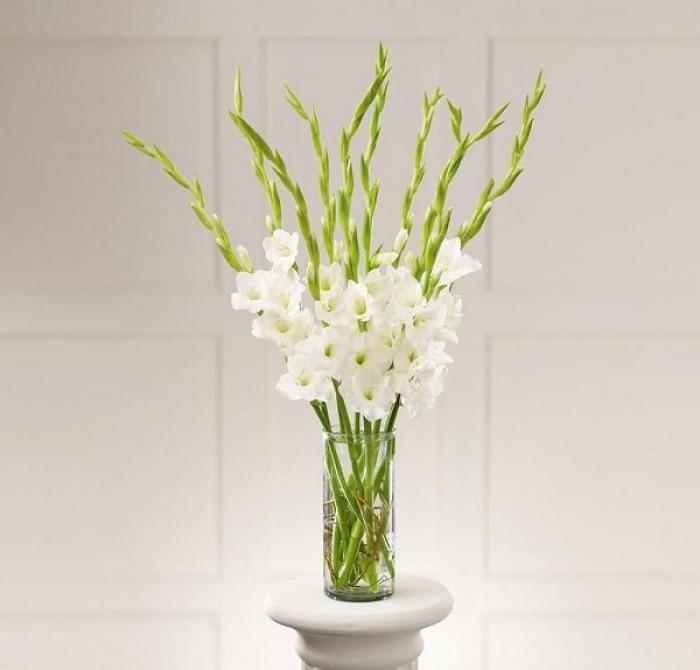Chuyên cung cấp củ giống hay lay ơn, hoa dơn chuẩn giống, uy tín13