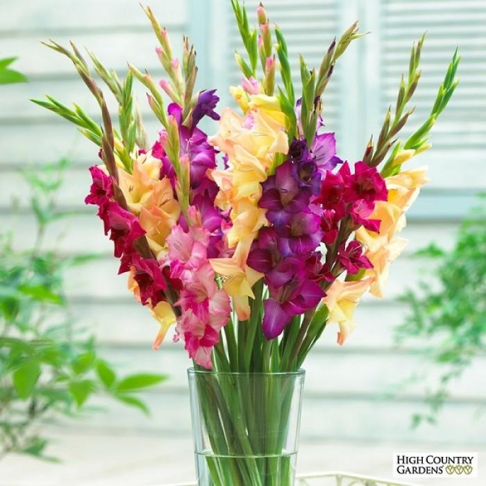 Chuyên cung cấp củ giống hay lay ơn, hoa dơn chuẩn giống, uy tín11