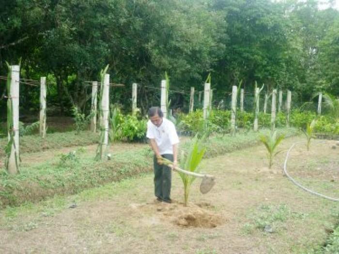 Viện cây giống trung ương, giống dừa xiêm xanh lùn, chuẩn giống, cây giống chuẩn đẹp5