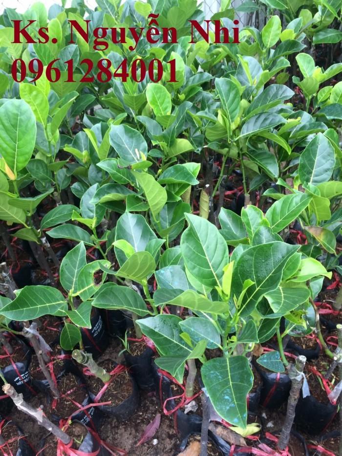 Cung cấp giống cây mít ruột đỏ, cây giống đầu nguồn uy tín, chất lượng1
