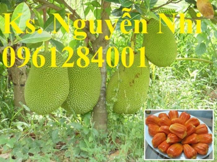 Cung cấp giống cây mít ruột đỏ, cây giống đầu nguồn uy tín, chất lượng9