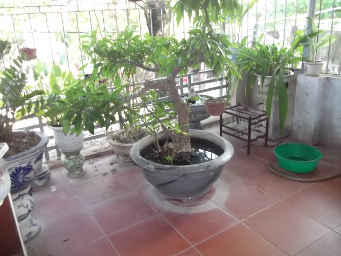 Đang cần bán gấp nhà mặt đường Nguyễn Văn Trỗi