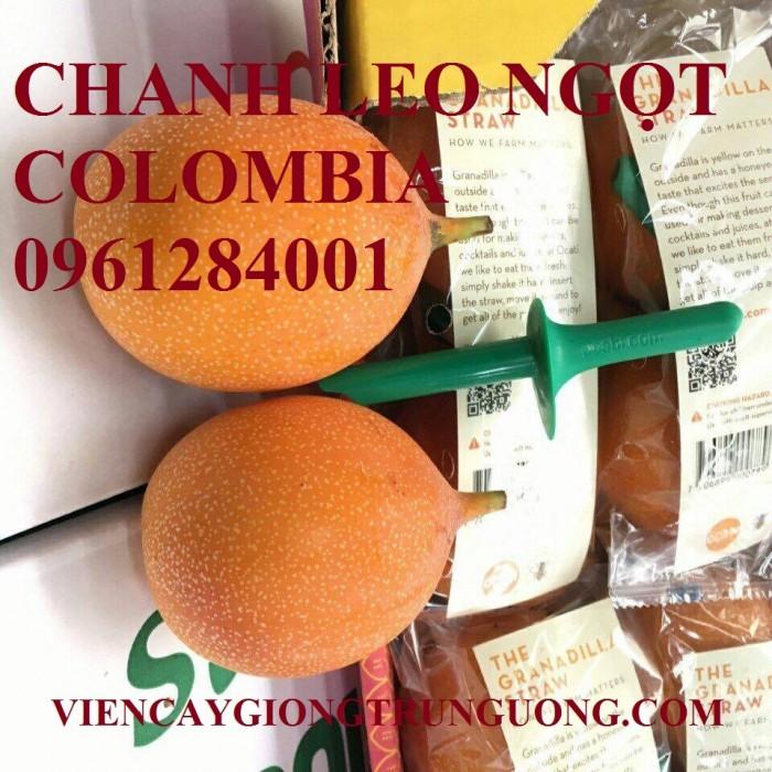 Mua cây giống chanh leo ngọt colombia, chanh leo vàng ngọt, cây giống nhập khẩu uy tín6