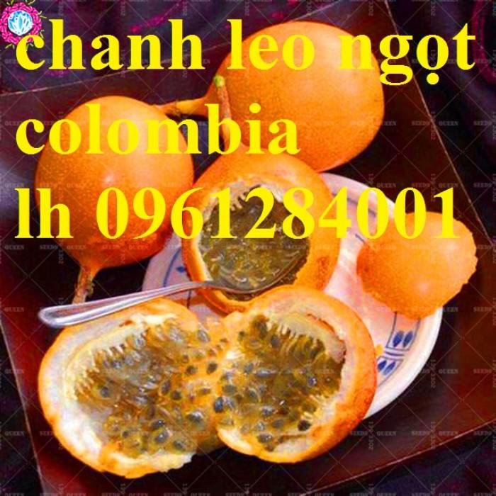 Mua cây giống chanh leo ngọt colombia, chanh leo vàng ngọt, cây giống nhập khẩu uy tín7