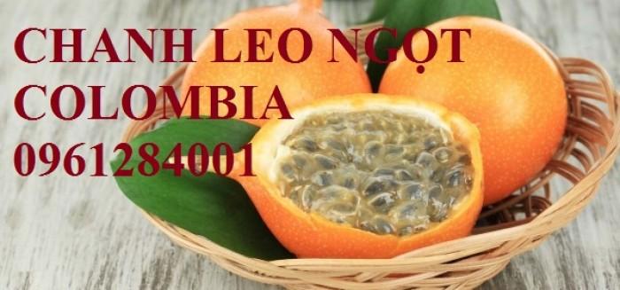 Mua cây giống chanh leo ngọt colombia, chanh leo vàng ngọt, cây giống nhập khẩu uy tín15