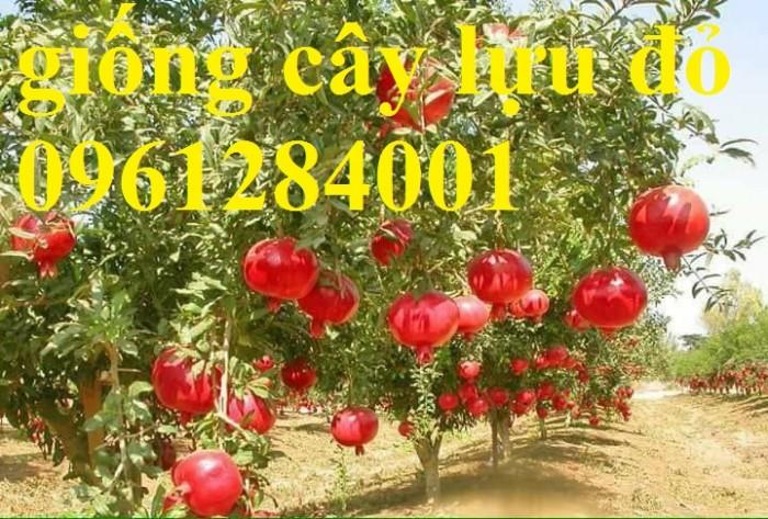 Địa chỉ uy tín cung cấp giống cây lựu lùn đỏ Ấn Độ, hỗ trợ kỹ thuật trồng và sản phẩm đầu ra