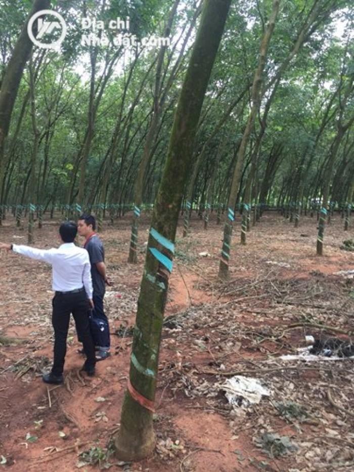 Cơ hội ngàn vàng! Để sở hữu đất Long Thành, Đồng Nai chỉ 323tr, thổ cư 100%