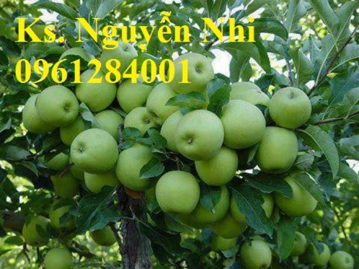 Bán cây giống táo đại, chuẩn giống, số lượng lớn, giao cây toàn quốc.6