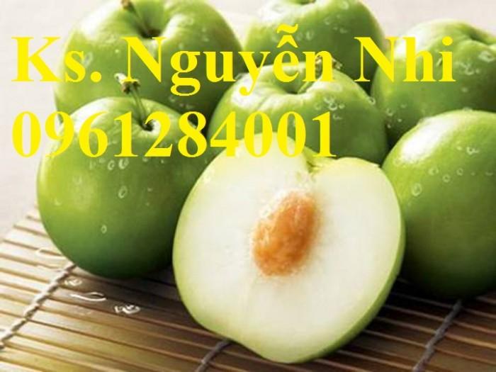 Bán cây giống táo đại, chuẩn giống, số lượng lớn, giao cây toàn quốc.10