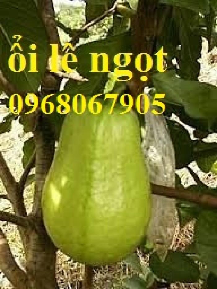 Bán cây giống ổi lê đài loan, số lượng lớn, giao cây toàn quốc.5