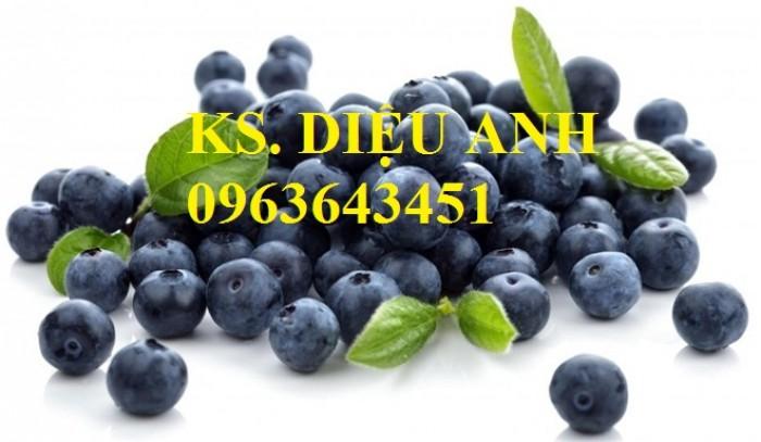 Cung cấp cây giống việt quất, cây việt quất bốn mùa, cây việt quất đang có quả sai siêu đẹp, giá rẻ7