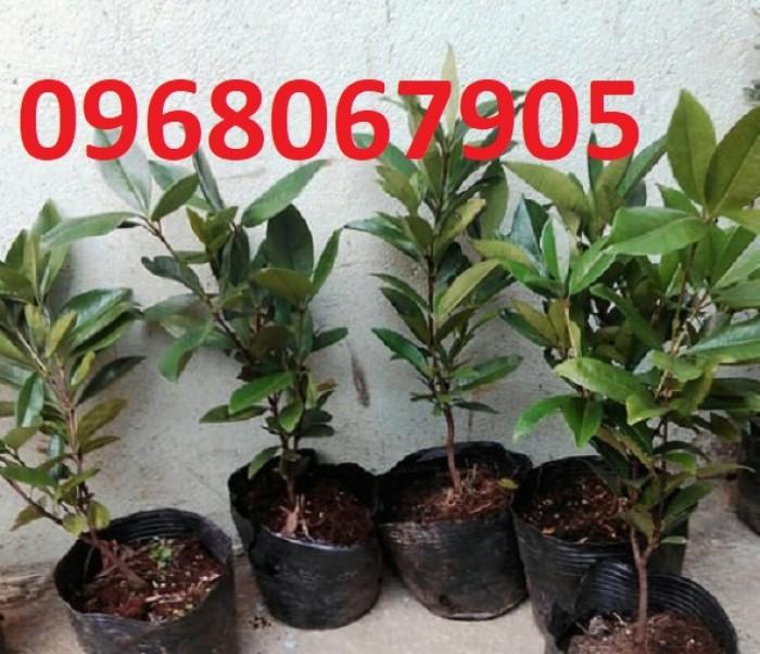 Chuyên Cung Cấp Giống Cherry Brazil,Giống Cây Cherry,Cherry,Giống Cây Cherry Chất Lượng Cao1