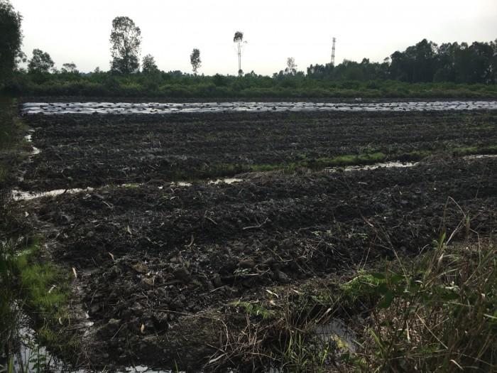 Bán đất mẫu Mặt tiền đường quốc lộ N2 Huyện Bến Lức Tỉnh Long an