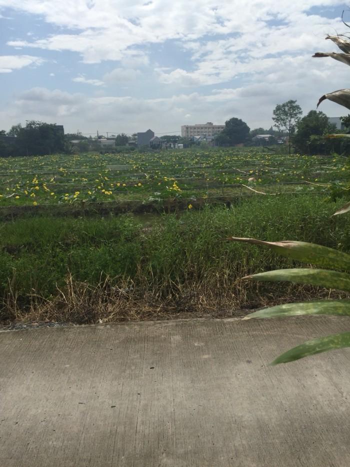 Đất mặt tiền đường, Đoàn Nguyên Tuân xã Tân Quý Tây, Bình Chánh.