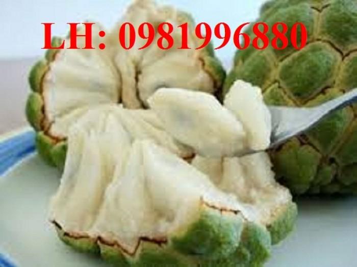 Chuyên cung cấp giống cây Na bở Đài Loan4