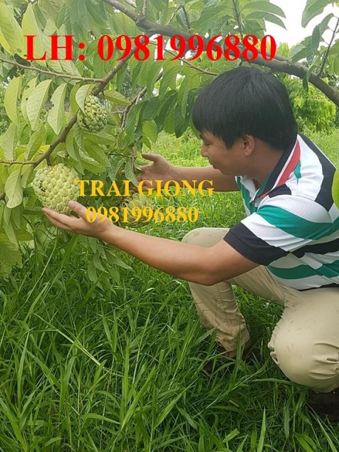 Chuyên cung cấp giống cây Na bở Đài Loan0
