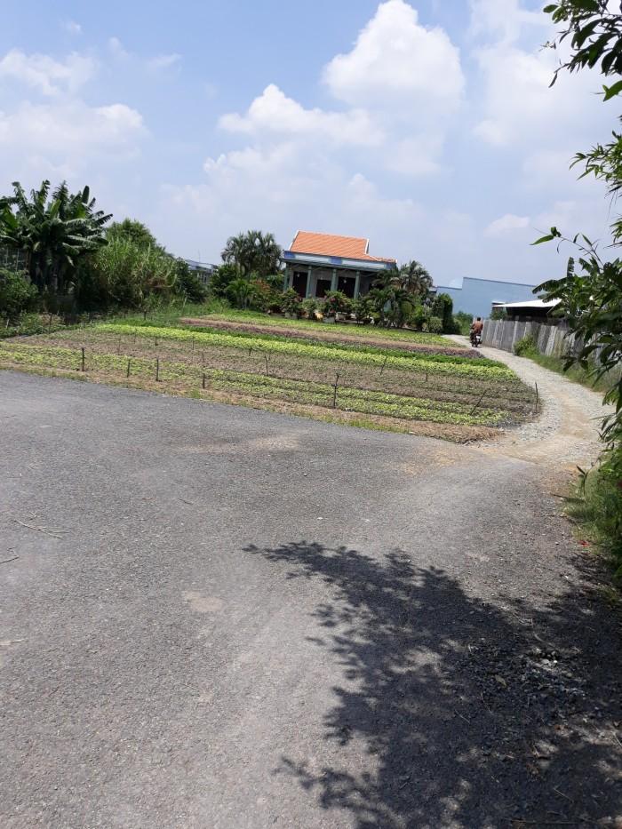 Cần bán gấp 550m2 đất thổ cư mặt tiền lộ nhựa, xã Trường Bình, Cần Giuộc, chỉ 10 triệu/m2.