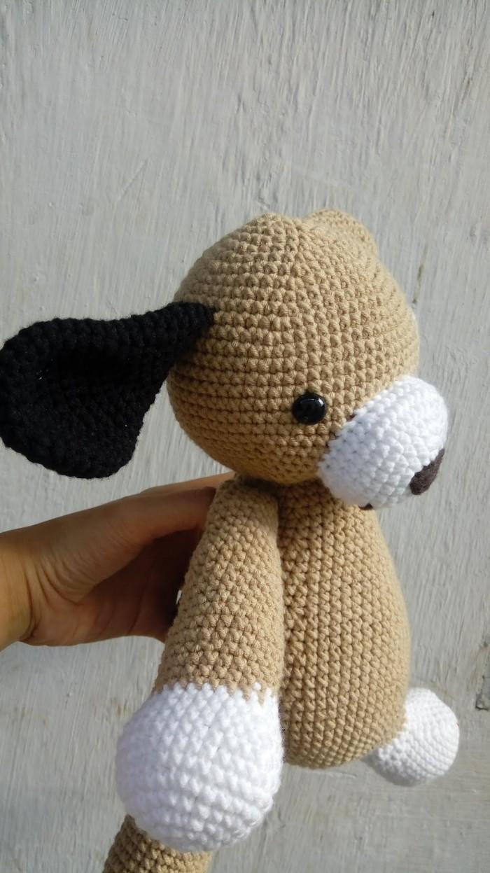 Chó bông Husky4