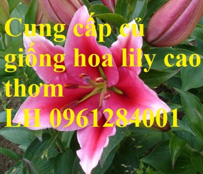 Cung cấp các loại củ giống hoa trồng tết: hoa dơn, hoa ly, tulip, tiên ông, thủy tiên, cát tường, đồng tiền,...3