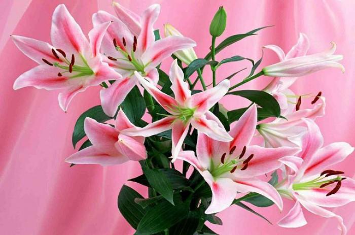 Cung cấp các loại củ giống hoa trồng tết: hoa dơn, hoa ly, tulip, tiên ông, thủy tiên, cát tường, đồng tiền,...12
