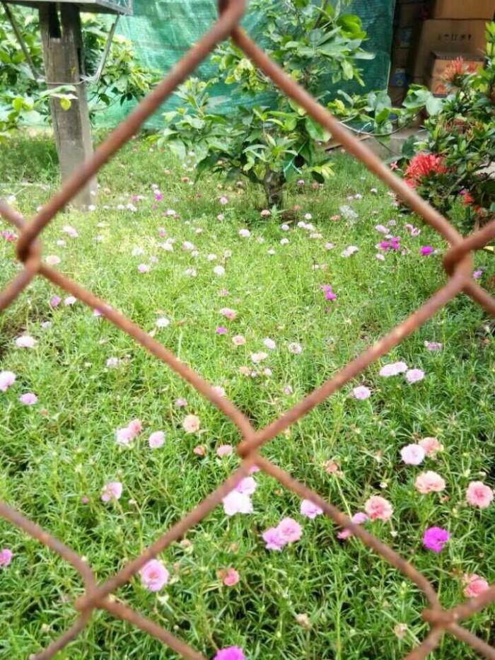 Bán đất tại xã Đa Phước, Huyện Bình Chánh, DT 2.037m2, có nhà 130m2, SHR
