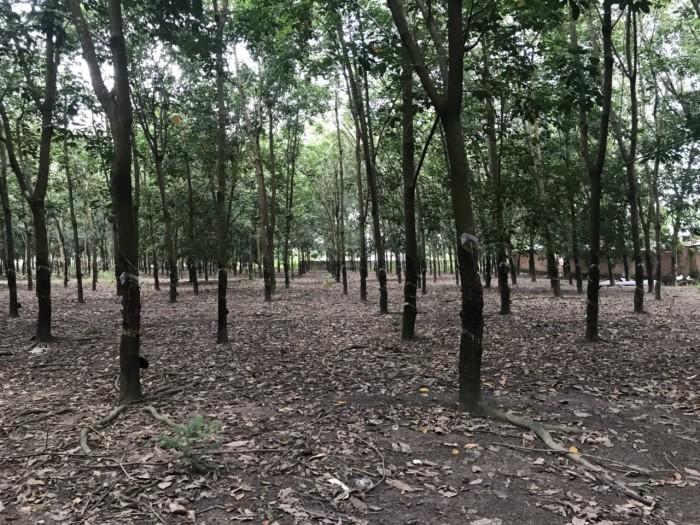 Bán Đất Mặt Đường Quốc Lộ 14 Ấp 6 Tân Thành Đồng Xoài Bình Phước.