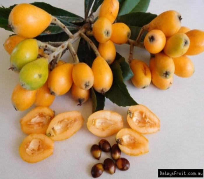 bán GIỐNG CÂY BIWA,cây tỳ bà, sơn tra, mận nhật nhập khẩu chất lượng cao5