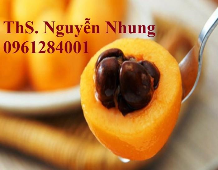 bán GIỐNG CÂY BIWA,cây tỳ bà, sơn tra, mận nhật nhập khẩu chất lượng cao3