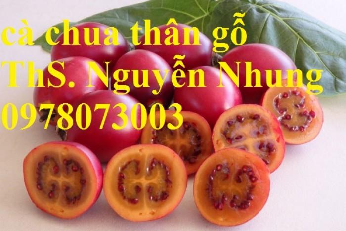 Cung cấp giống cây cà chua thân gỗ chất lượng cao9